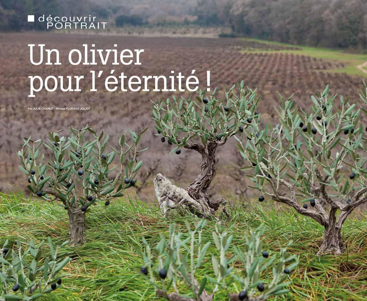 Maisons et décors – Un olivier pour l'éternité !