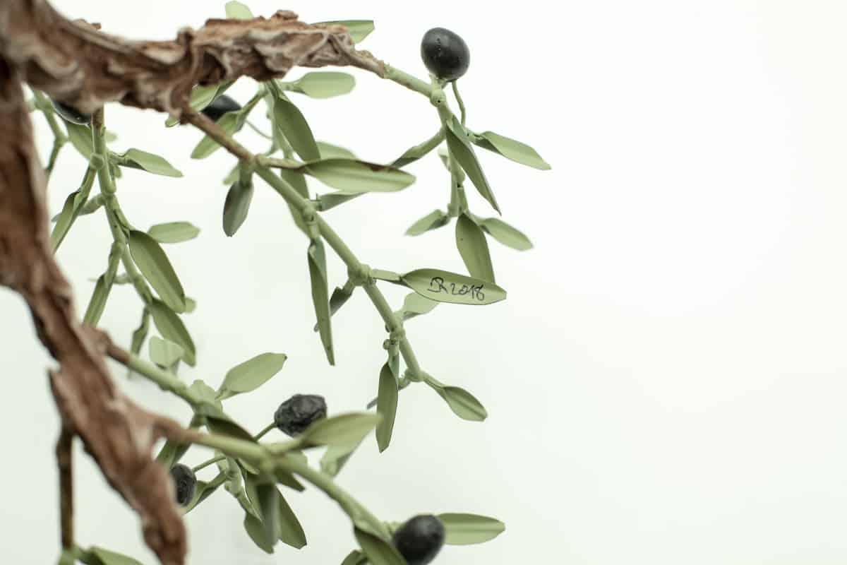 olivier-forge-sur-rocher-4672